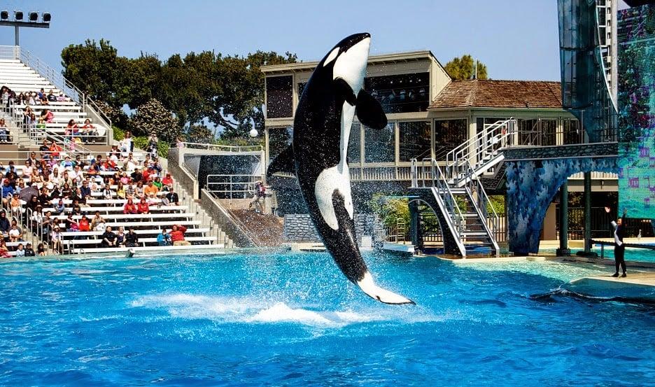 O que fazer em San Diego | SeaWorld