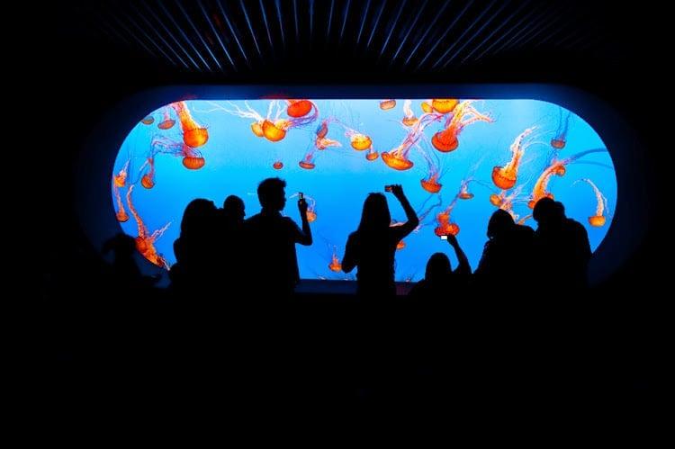 Tours no Monterey Bay Aquarium na Califórnia