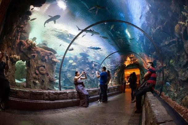 Exibições no Shark Reef em Las Vegas