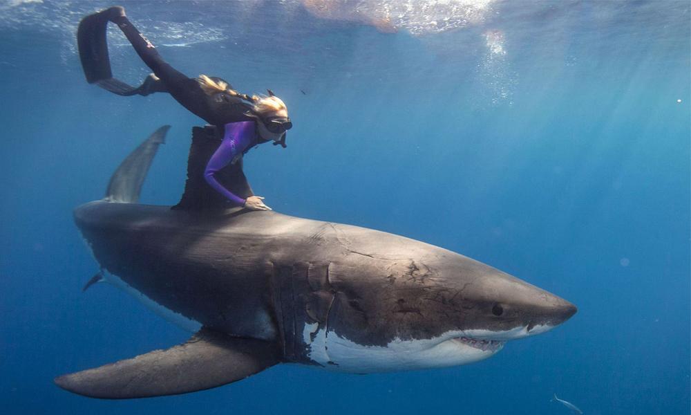 Shark-Reef-Main