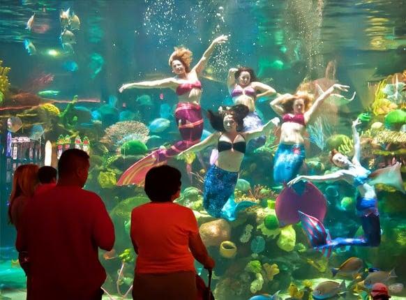 Como funciona o Mermaid Aquarium em Las Vegas