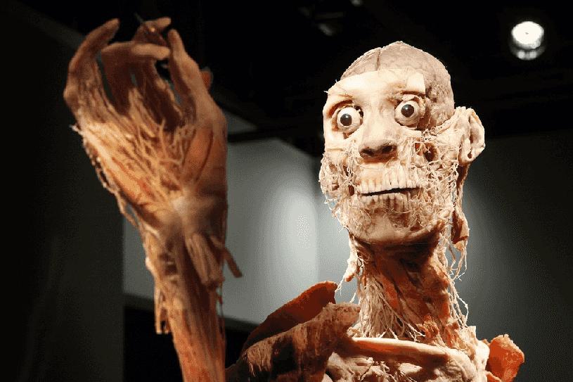 Bodies...The Exhibition em Las Vegas