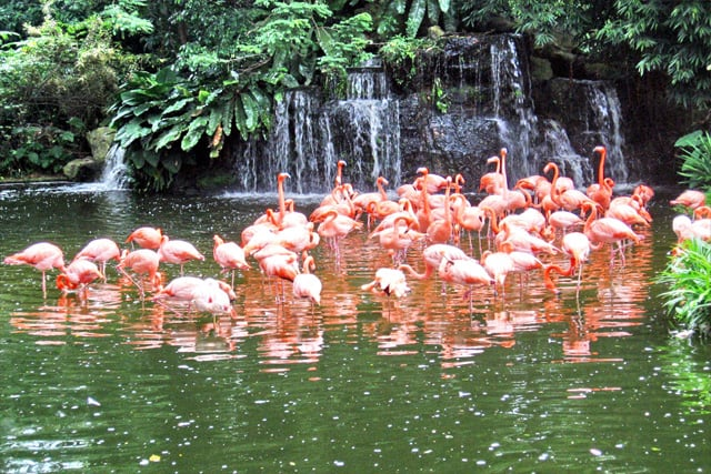 Flamingo Wildlife Habitat em Las Vegas