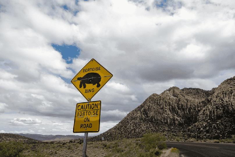 Tartarugas ameaçadas no Red Rock Canyon